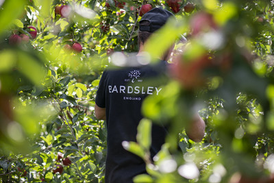 A Bardsley employee examines apples at the company's UK orchard (PRNewsfoto/Camellia Plc)